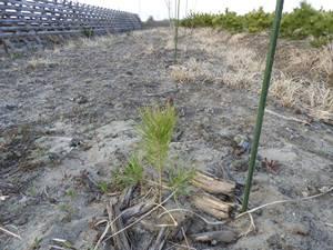 広葉樹を2回補植して、それでも成長の見込みがない箇所を選びました