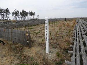 2018年植樹祭の木々も、十分犠牲木の立ち位置ですが・・・