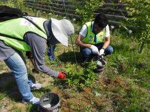 広葉樹への施肥