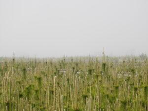 濃霧で遠くが全く見えない時も、珍しくありません