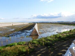 右側が頑張れば必ず改善できる多湿中の多湿0.6ha。撮影:植付直後の2018年5月