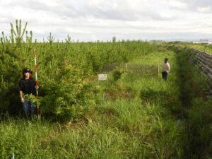 国有林。左の木は2014年に活着できたコナラ。たまにはちゃんと育つものもある。