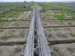 南から撮影。左右は支線のLサイズ溝。本線と支線が完成したら、手前のように、本線の上に防風柵を戻す。