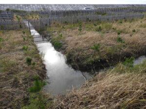 2018年植栽地の全長220mの本側溝から遊水地に向かう折り返し点。水が少しづつ流れ続けている