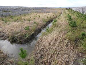 折り返し点に向かう220mの本側溝。ここにも枝溝から流れている。