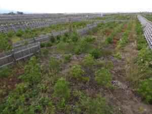 2016年植栽地の代表的な滞水箇所