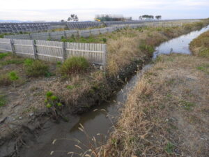 浅山堀、2万本の苗を守る大排水口として頑張ってくれてます。