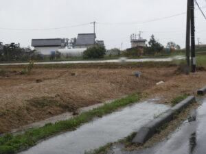 台風の影響で稲わらが水田を覆う。刈り取りが遅れ、なぎ倒されている水田もあり、一行は被害に胸を痛めていた。