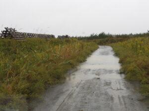 名取1区と11区の間の作業道。この道は遊水化しても、透水性がよく、雨の後で困ったことはない。