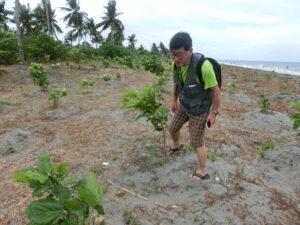 タリサイという木を中心に植え、試験しています