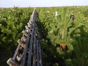 2015年第2回植樹祭。昨年あたりから単年度当たりの伸び幅が顕著。