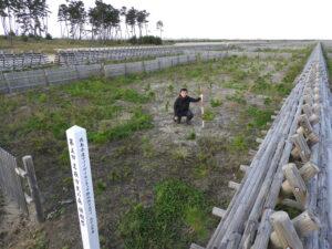 2018年植樹祭。防潮堤すぐ裏の「犠牲木」ゾーンなので風の圧を受けているさまが分かるが、ほぼ100%生存のまま。