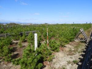2014年(第1回)植樹祭。仕様書通り、礫が全く混じらず、完全に山砂オンリーのため、かえって成長が著しく遅いと見える。