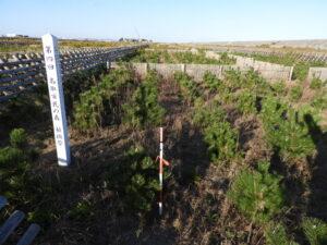 2017年植樹祭。盛土底に礫が多いため透水性がよく、成長は見事。