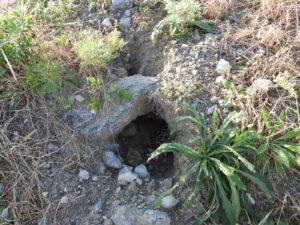 キツネの巣穴づくり失敗個所