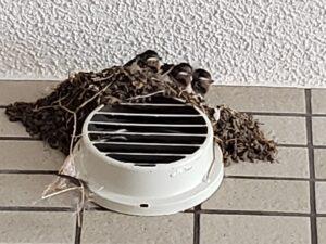 去年の7月15日。巣が手狭でした。