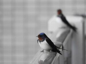 玄関前の手摺で、羽やすめ