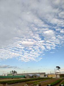 10月7日の育苗場 このくらい晴れていてほしかった…