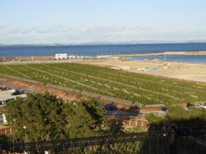 今夜の宿、名取市サイクルスポーツセンター屋上より。名取市海岸林北端2016年植栽地。