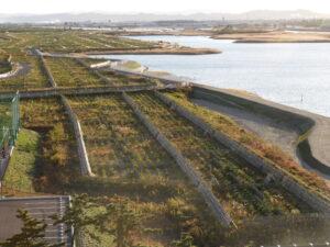 名取市海岸林の真南を望む。すべて屋上から撮影。手前は2018年植栽地。右は広浦。