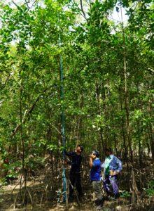 青い棒は手づくりの「測竿」。継ぎ足して樹高を計測します。