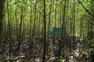 住友化学の森、2008年植栽地看板前。この根の中を歩いて。