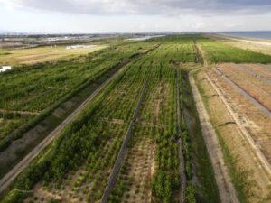 見ていただいた名取市南端付近から見た全景。手前は2015年植栽地。右手前は2020年5月植栽地。